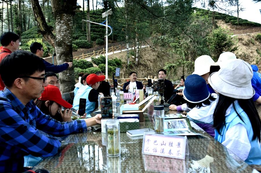 镇巴县怡溪春茶业公司董事长符再军与向直播间的网友介绍茶园