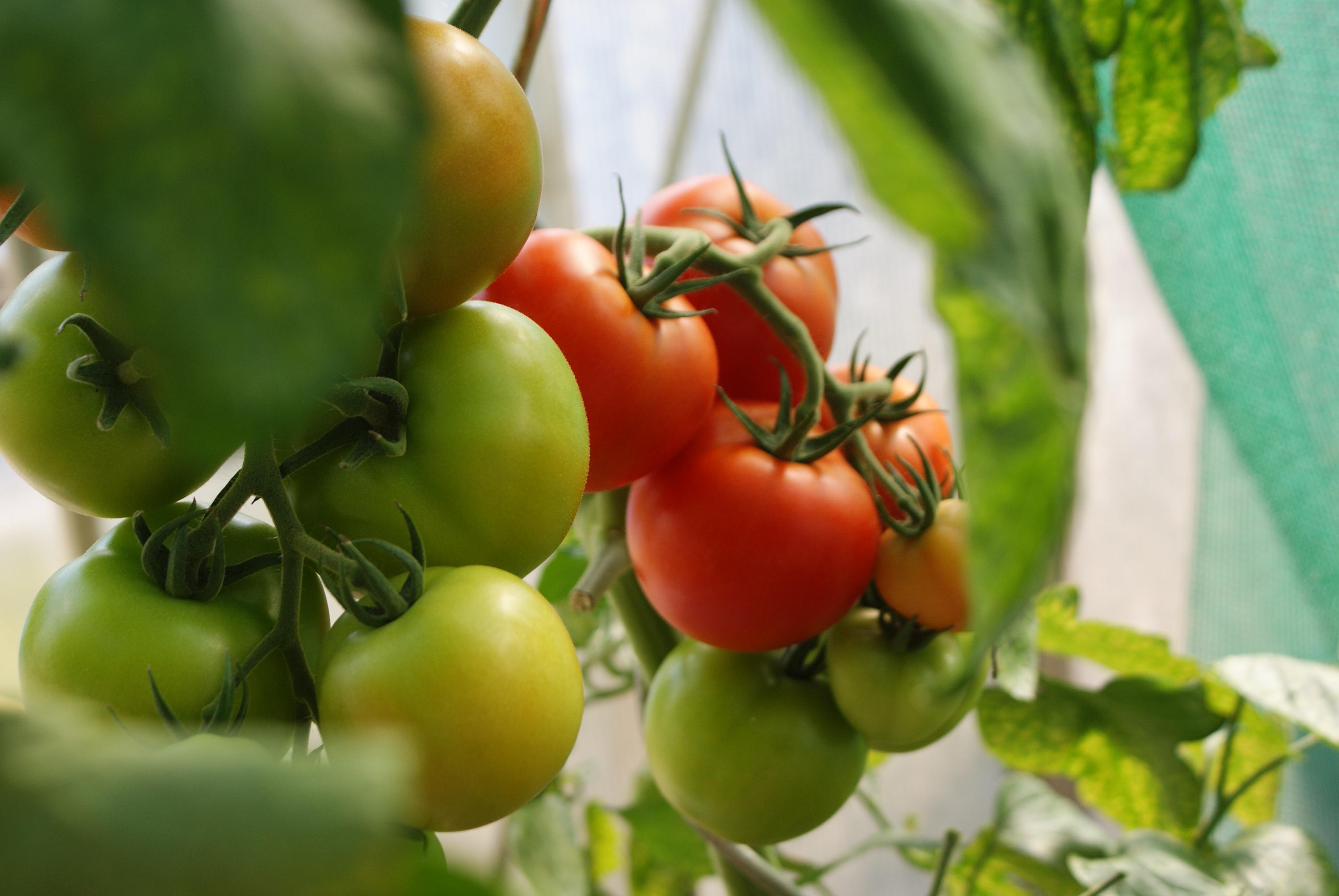 反季节蔬菜